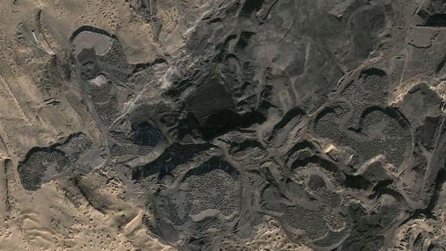 Une partie de la forêt fossilisée