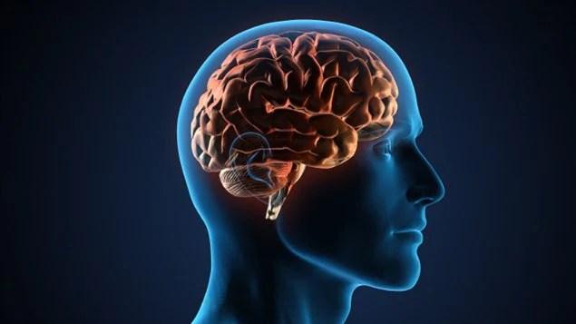 Représentation du cerveau humain