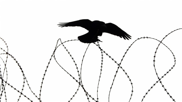 Résultats de recherche d'images pour «oiseau barbelé»