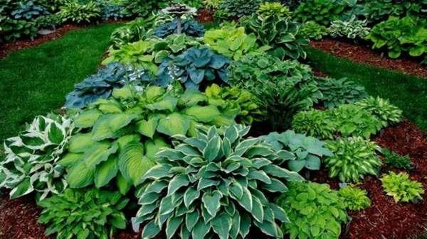 des plantes pour les jardiniers