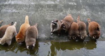 【花蓮。玩】4大驚好玩體驗 溯溪跳水x兆豐農場x立川漁場撈蜆x賞鯨豚樂
