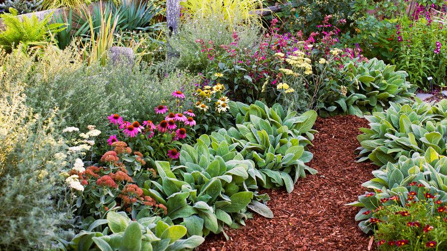 8 flowers plant instant