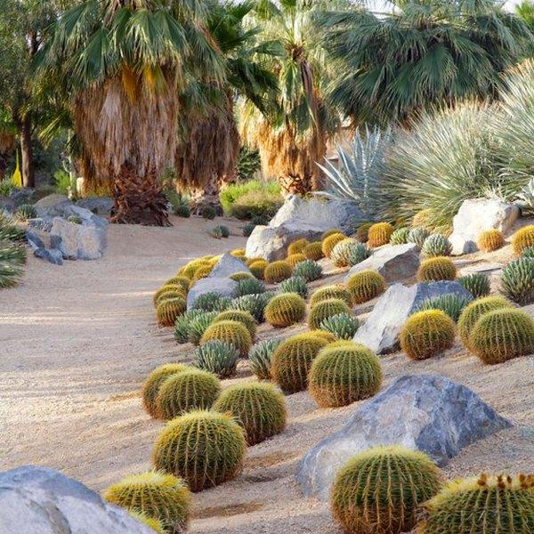 design with cactus - sunset magazine