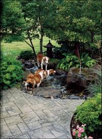 Backyard Ideas for Dogs - Sunset - Sunset Magazine