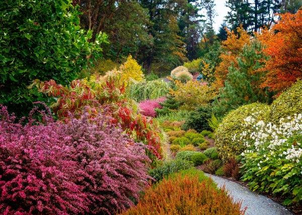 great fall foliage