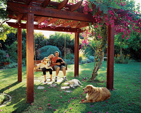 backyard ideas dogs - sunset