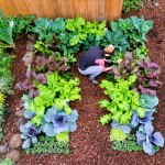 Try Growing These Easy Tasty And Nutritious Winter Vegetables Sunset Sunset Magazine