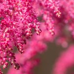 Shade Plants Make Low Light Gardens Pop With Color Sunset Sunset Magazine