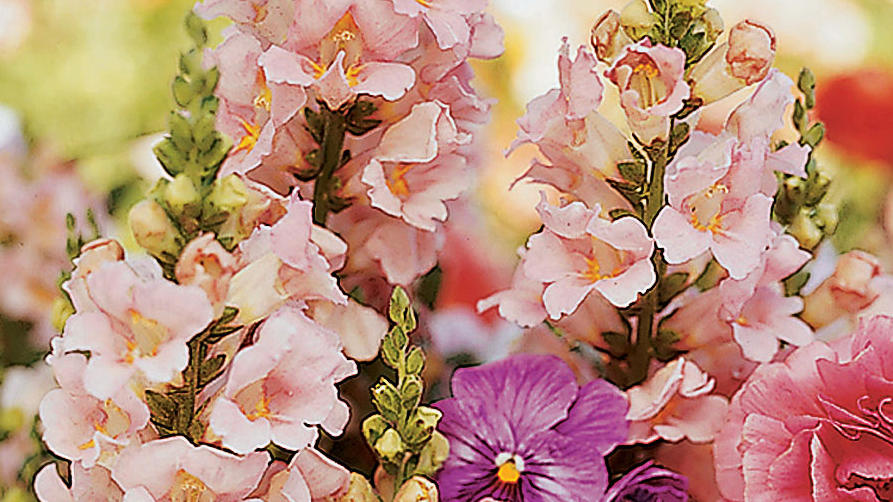 Northern California Checklist October Sunset Magazine