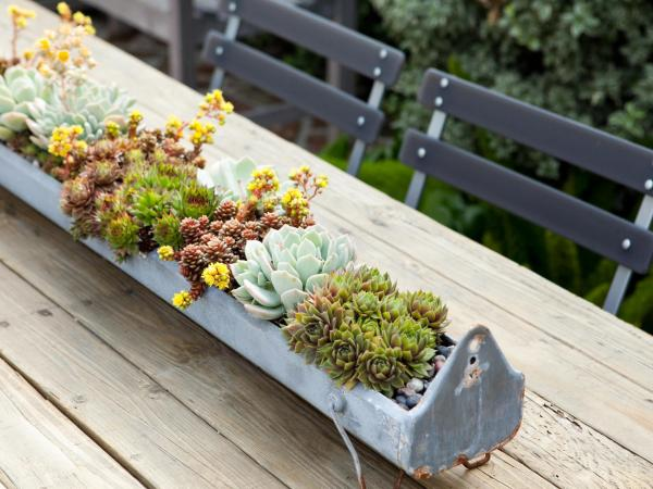 8 Foolproof Ways Succulents Alive - Sunset