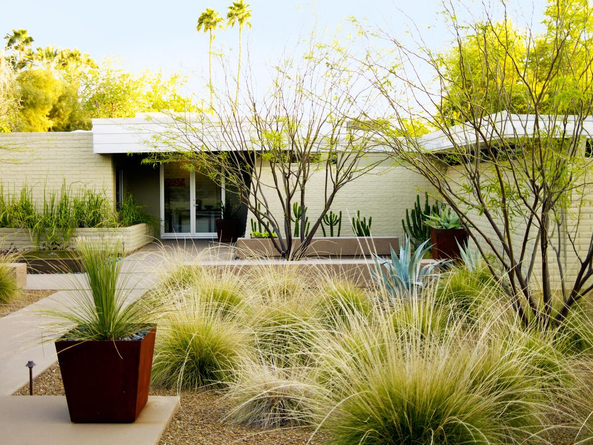 4 essential desert landscaping
