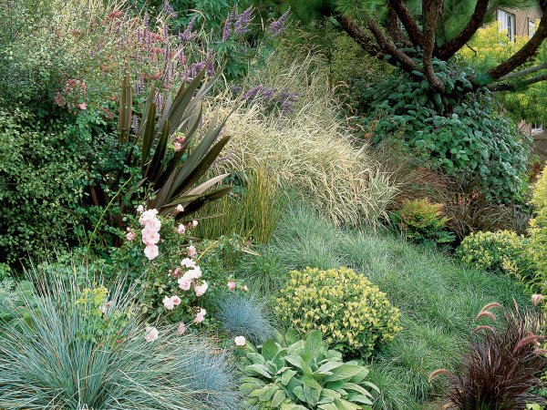 gorgeous grasses - sunset magazine