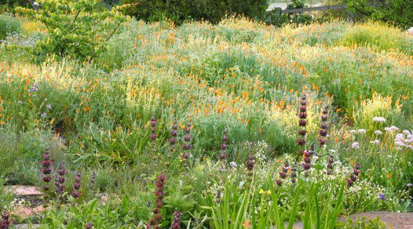 meadow garden design ideas - sunset