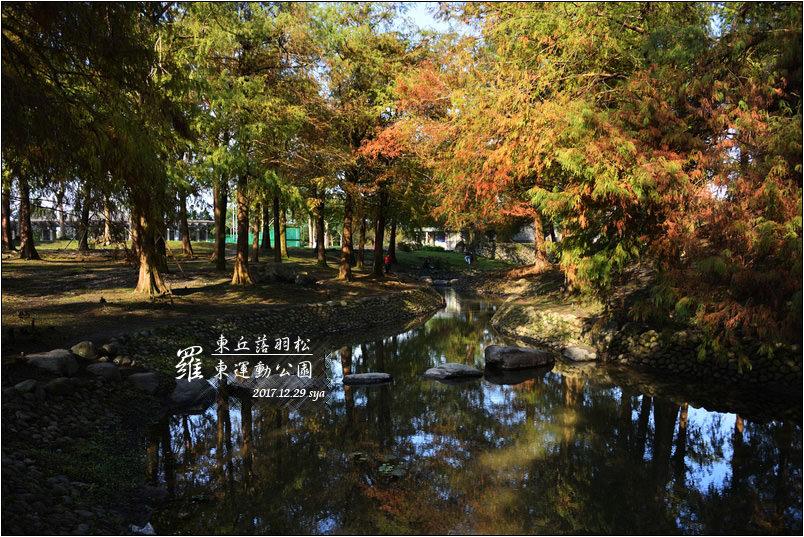 羅東運動公園 東丘落羽松