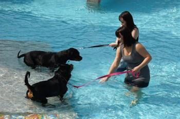 【臺中。旅遊】2021臺灣畜犬協會臺中國際畜犬比賽在海灣樂世界舉辦,看毛小孩的萌樣讓人療癒。