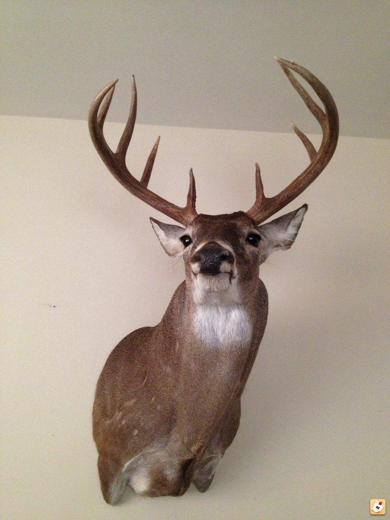 6900 Series Deer Mount