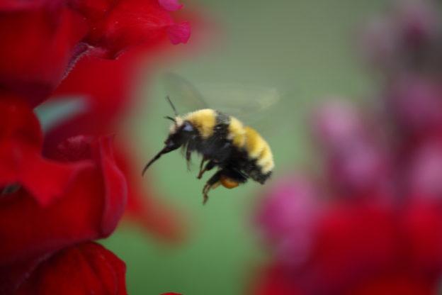 蜜蜂消失又一證明,研究:農藥損害幼蟲發育中大腦 | TechNews 科技新報