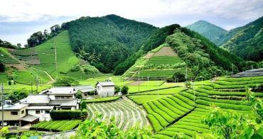 【靜岡遊記】森內茶農園 近距離體驗靜岡茶農的日常!還有品茶教學唷