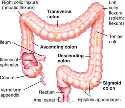 Spiral colon  definition of spiral colon by Medical