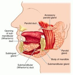 Gland   definition of gland by Medical dictionary