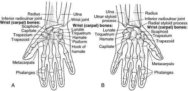Carpal Joints; Intercarpal Joints