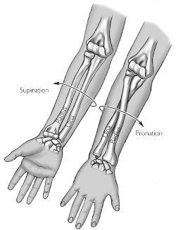 Illustration: Pronation and supination