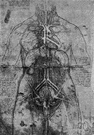 Gross anatomy - definition of gross anatomy by The Free ...