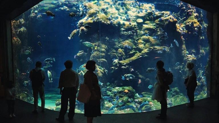 the 7 best aquariums