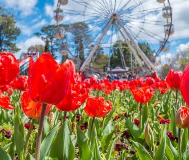 Flowers In Springtime Shutterstock