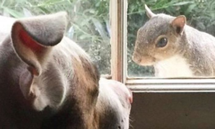 rescued squirrel surprises family