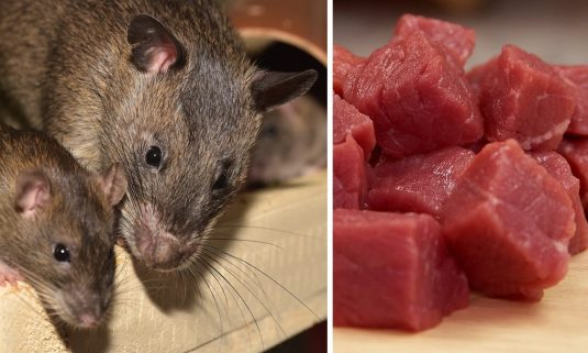 US Customs Seize 32 Pounds of African Rat Meat at Chicago Airport