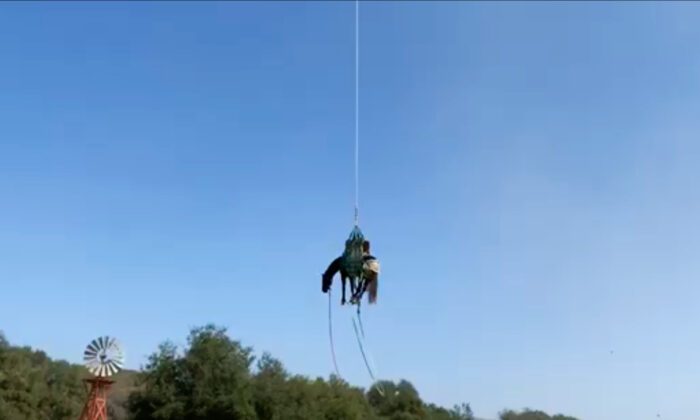 Horse Takes Flight After Falling into OC Ravine