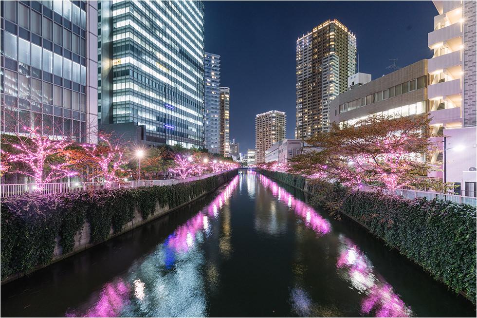 【2019東京點燈】東京目黑川「冬之夜櫻」絕美櫻花冬季聖誕燈飾活動!