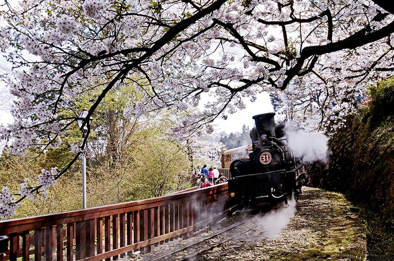 【2020阿里山櫻花季】賞櫻路線、交通管制、阿里山住宿推薦一篇搞定!