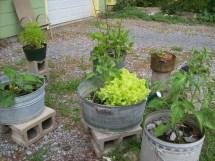 Creative Garden Planters Thriftyfun