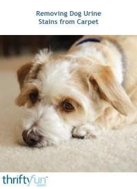 Cleaning Dog Urine Stains from Carpet | ThriftyFun