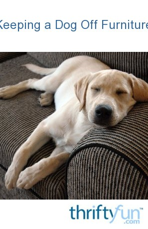 How To Keep Dogs Off Furniture   Furniture Walpaper