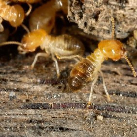 Homemade Remedies For Termites ThriftyFun