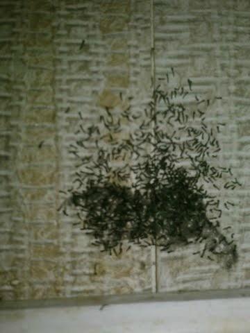 Tiny Black Bugs in Bathroom  ThriftyFun