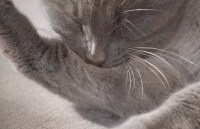 Cat Allergic To Carpet Powder - Carpet Vidalondon