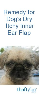 Remedy for Dogs Dry Itchy Inner Ear Flap  ThriftyFun