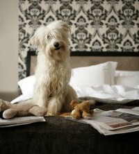 Dog Pees in Owner's Bed   ThriftyFun