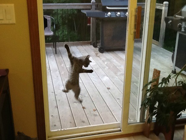 Image Result For Where Can I Buy New Window Screens
