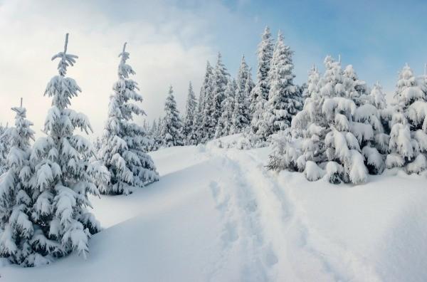 Snow Scenery Photos  ThriftyFun