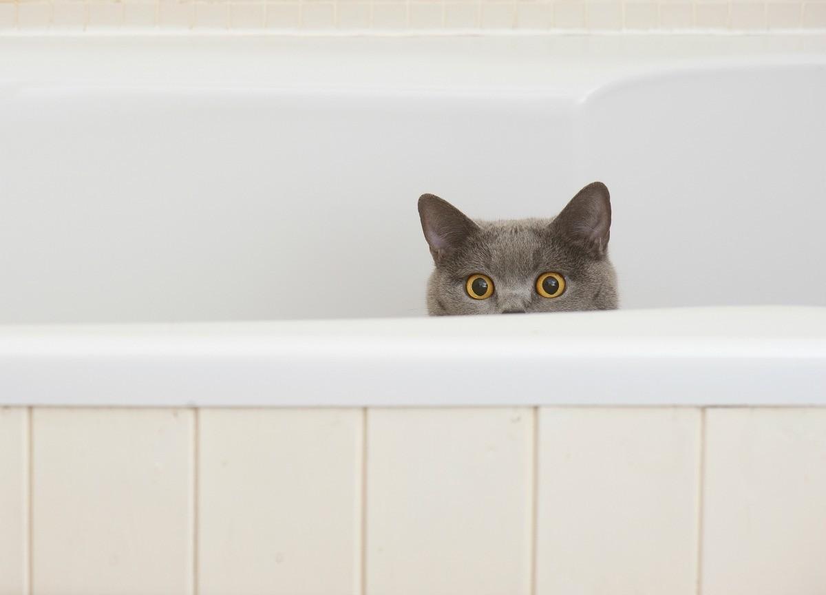 cat pooping in bathtub