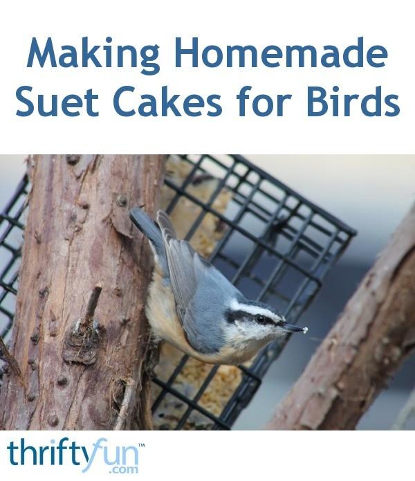 Making Homemade Suet Cakes for Birds  ThriftyFun