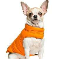 Chihuahua Clothing Patterns   ThriftyFun