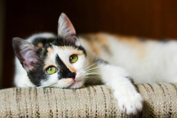 Mixed Breed Cat Photos  ThriftyFun