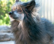 remedies hair loss in dogs