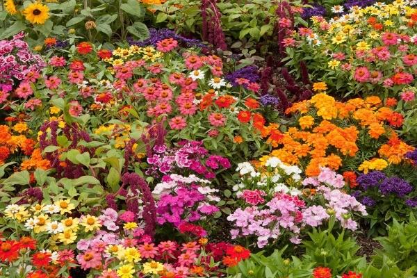 making garden flower bouquet
